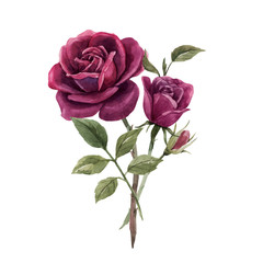 Beautiful vector watercolor floral image with red rose flower. Stock illustration.