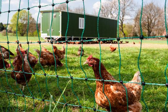 Mobiler Hühnerstall für Legehennen in der Freilandhaltung
