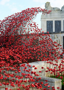 Low Angle View Of Red Poppy Flowers Blooming Against Sky