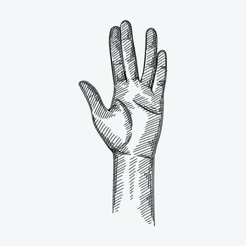 Hand-drawn sketch of The Live Long And Prosper Hand Sign on a white background. Hand Signs And Gestures. Hand poses.