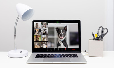 Dog and Cat Web Video Conference Call