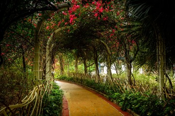 Wall Murals Road in forest Beautiful pathway going through a tunnel surrounded by trees and pink flowers in Hong Kong