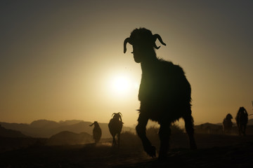 Silhouette Of A Sheep Against Clear Sky At Sunset