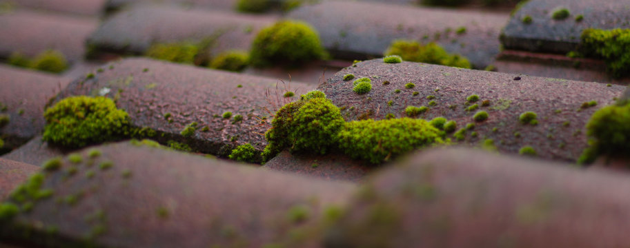 Close-up Of Moss On Roof