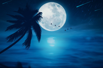 Wall Mural - Full moon with star fall and birds flying at tropical beach abstract background. Travel vacation freedom and nature environment concept.