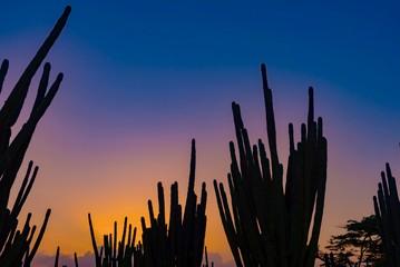 Fototapeta Silhouette Cactus On Land Against Sky During Sunset obraz