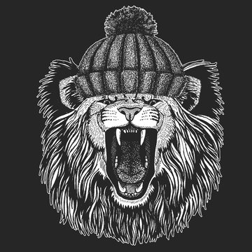 Lion. Wild animal portrait. Winter knitted hat. Face of african cat.
