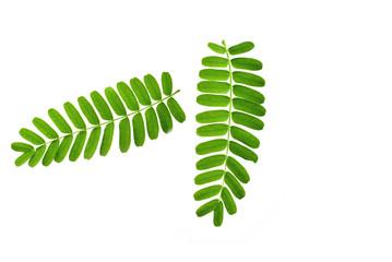 fern leaf isolated on white