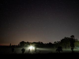 Fotobehang Chocoladebruin Silhouette Trees Against Sky At Night