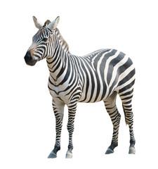 Poster Zebra zebra isolated
