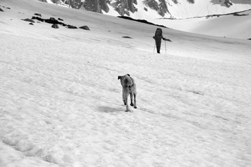 Fototapete - Dog and trekker on snowy plateau in high mountains