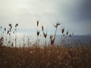 Fototapeta Close-up Of Stalks Growing Against Sea