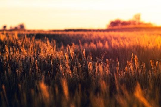 Feld auf der Albhochfläche
