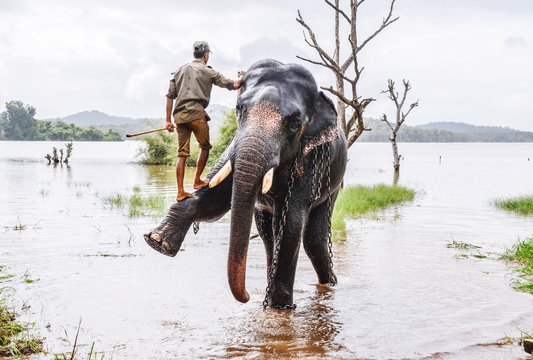 Full Length Of Zoo Keeper Climbing On Elephant In Lake At Forest