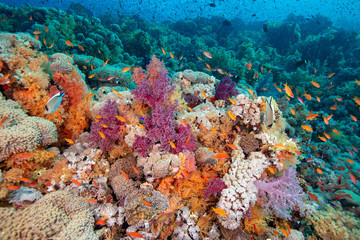 Keuken foto achterwand Koraalriffen coral reef and fishes
