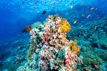 Garden Poster Coral reefs coral reef and fishes