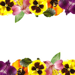 Wall Mural - Beautiful floral pattern of tulips, alstroemeria and pansies. Isolated