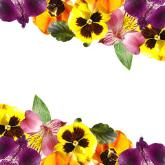 Fototapete - Beautiful floral background of tulips, alstroemeria and pansies. Isolated