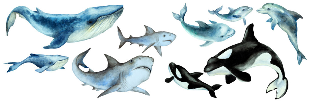 Set of a big blue whale, shark, orca killer whale, dolphins with cubs on a white background, panorama. Hand drawn watercolor.