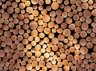 pile of sawn logs of spruce trees waiting for transportation in forest