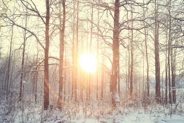 sunset in the winter forest / February sunset in the park, snow forest and sun, winter rest