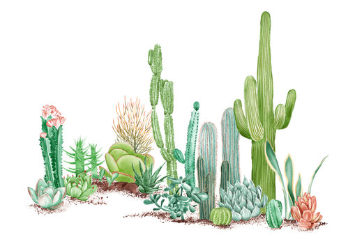watercolor illustration of some desert plants