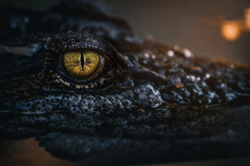 Close up - crocodile or alligator eyes.