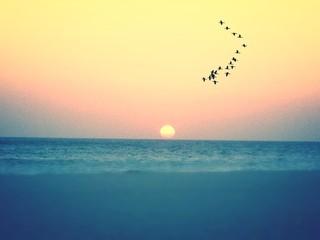 Fototapeta Flock Of Birds Flying Over Sea At Sunset