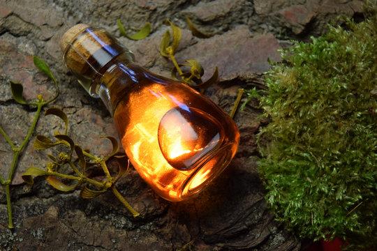 Secret Magical Elixir forest scenery