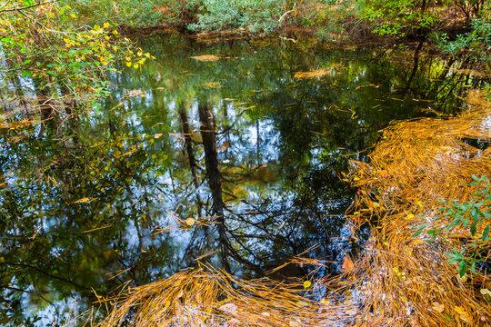 Loblolly Pine Tree Reflection In Marsh, Assateague Island National Seashore, Maryland, USA