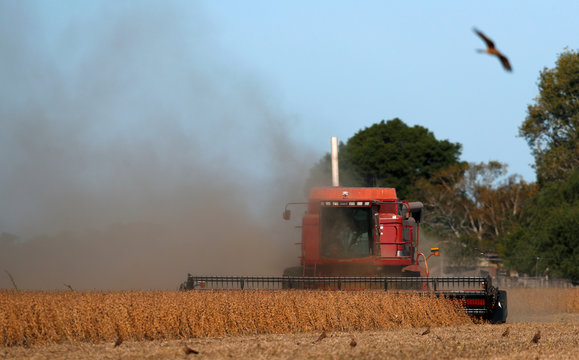 A combine harvester is used to harvest soybeans on a farmland in Chivilcoy, on the outskirts of Buenos Aires