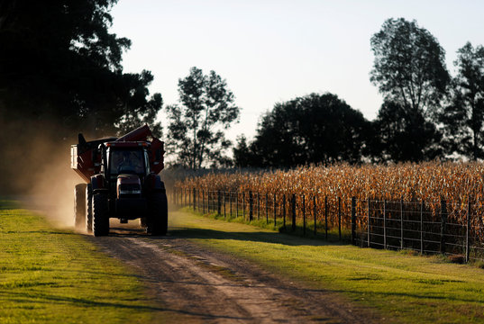 A truck drives past corn plants on a farmland in Chivilcoy, on the outskirts of Buenos Aires