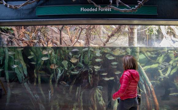 The Shedd Aquarium is a popular Tourist Attraction in Downtown Chicago