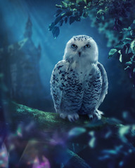 Foto op Canvas Uil The white owl