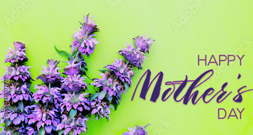 Purple flowers on green background with mothers day text for holiday.