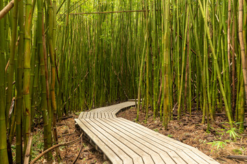 Printed roller blinds Bamboo Boardwalk through the Pipiwai trail bamboo forest