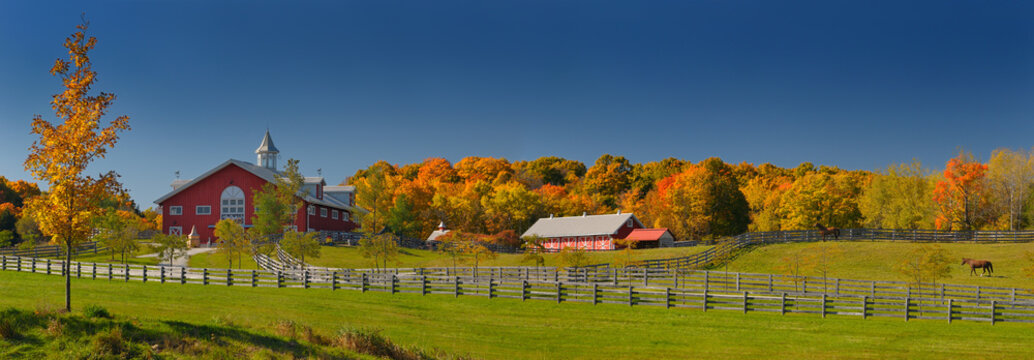 Fall foliage and horses at a horse farm in Caledon Ontario