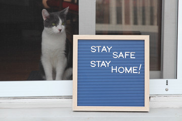 Stay home quarantine coronavirus pandemic prevention. Beautiful cat stays near the open window