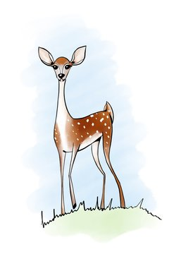 Young fawn illustration