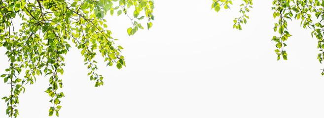 rahmen aus laubblätter auf weißem hintergrund Fototapete