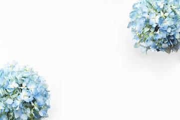 Fond de hotte en verre imprimé Hortensia Blue hydrangea flower on white background with copy space.