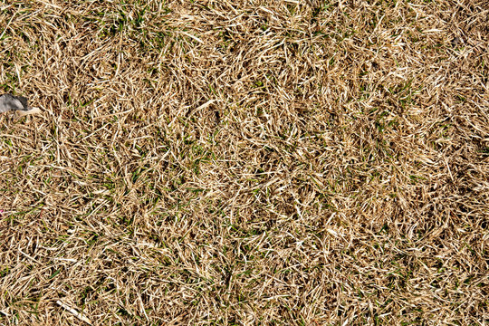 natural background texture of last year's grass