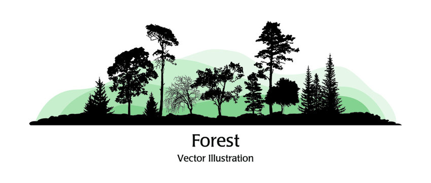 Vector illustration of a forest silhouette with varied trees. Isolated over white background. The concept of forest edge and wildlife.
