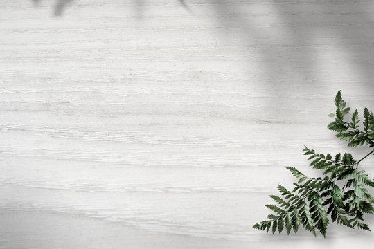 Green fern on white