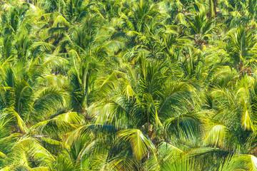 Canvas Prints Palm tree Coqueiros