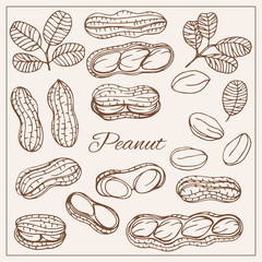 Hand drawn sketch style nuts set Peanut Vector doodle illustrations collection isolated.