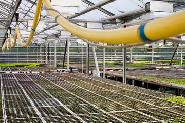 Foto op Plexiglas Stadion Salad plants growing inside a modern greenhouse
