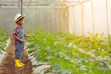 An Asian boy is walking around looking at melon plots in an organic house. Fototapete