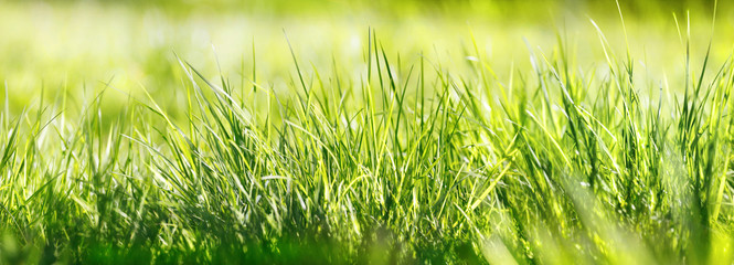 Fotoväggar - gras wiese natur sonne banner