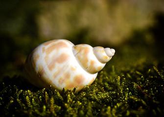 Sea shell laying on moss.